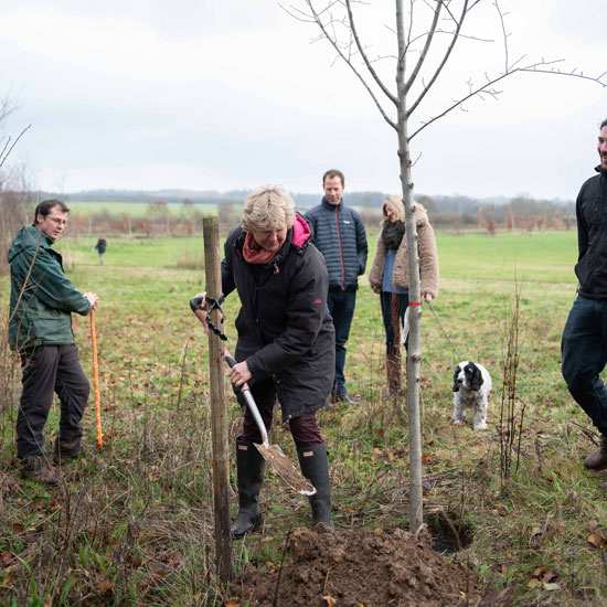 Sustainable Surrey Business plants a tree for every new Shere Kitchen